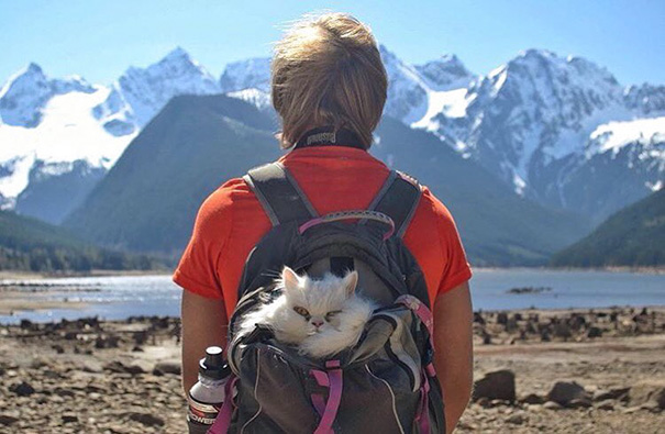 camping-with-cats