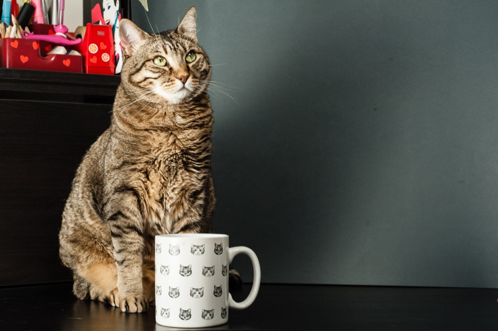 mug gatto tricoastal design