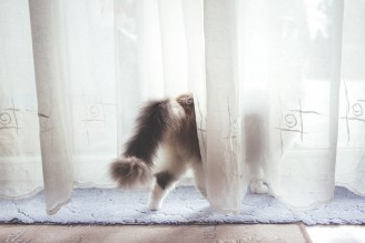 cat_behind_the_curtain