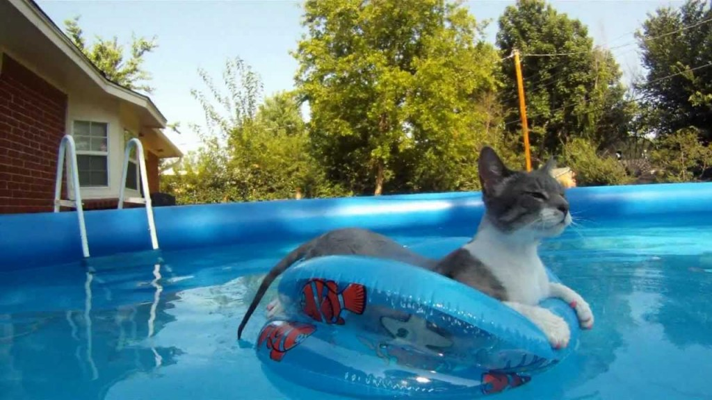 gatto in piscina