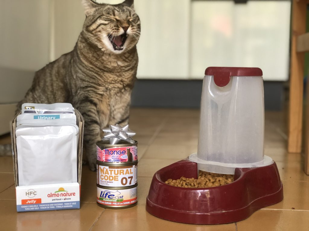 gatto pet food