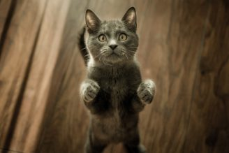 grey-kitten-on-floor-774731