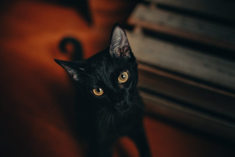 close-up-photography-of-black-cat-1931371
