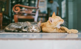 two-orange-and-brown-cats-reclined-on-brown-rug-1386422